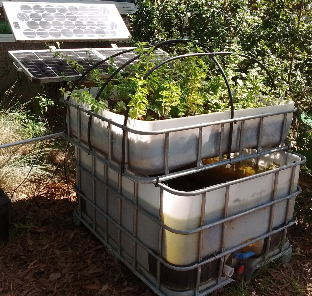 Sustainable Aquaponics in operation